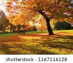 a colourful autumn landscape.   Shutterstock . vector #1167116128