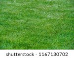 urban photography  a lawn is an ... | Shutterstock . vector #1167130702