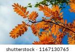 autumn landscape photography ...   Shutterstock . vector #1167130765