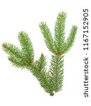 green fir branches isolated on... | Shutterstock . vector #1167152905