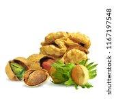 fresh walnut  nutritious... | Shutterstock .eps vector #1167197548