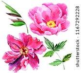 wildflower peony pink flower in ... | Shutterstock . vector #1167292228