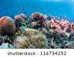 underwater reef scape | Shutterstock . vector #116734252