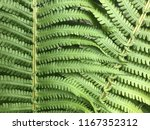 leaves of fern. texture. | Shutterstock . vector #1167352312