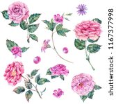 set of vintage watercolor roses ... | Shutterstock . vector #1167377998