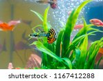 little fish in fish tank or... | Shutterstock . vector #1167412288