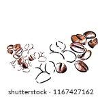 coffee beans vector sketch... | Shutterstock .eps vector #1167427162