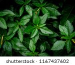 nature plane greenery leaf... | Shutterstock . vector #1167437602
