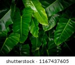nature plane greenery leaf... | Shutterstock . vector #1167437605