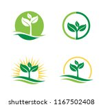 agriculture natural plant... | Shutterstock .eps vector #1167502408