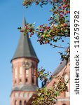Ripe hawthorn and Kant`s cathedral. Kaliningrad - stock photo