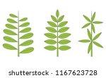 phyllotaxis. leaf arrangement | Shutterstock .eps vector #1167623728