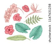 exotic flowers and leaves.... | Shutterstock .eps vector #1167631258
