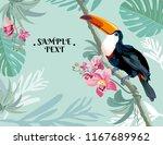 bird toucan on a branch.... | Shutterstock .eps vector #1167689962