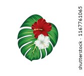 tropical wildflower hibuscus... | Shutterstock .eps vector #1167761065