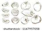 tomatoes collection of whole...   Shutterstock .eps vector #1167957058