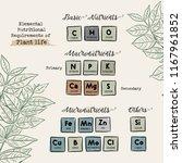 elemental nutritional... | Shutterstock .eps vector #1167961852