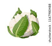 white cauliflower vegetable.... | Shutterstock .eps vector #1167980488