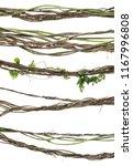 set wild dry liana jungle vine... | Shutterstock . vector #1167996808