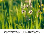 landscape view on the fresh... | Shutterstock . vector #1168059292