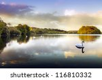 Picture Of A Swan On A Lake In...