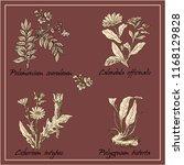 wild flowers. wreath of flowers. | Shutterstock .eps vector #1168129828