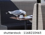 Seagull Sitting On The Table In ...