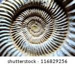 Fossilized Shells Of Ammonite...