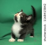 Stock photo black and white kitten on a green background in the studio 1168415842