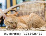 thai cat sleeping on wooden... | Shutterstock . vector #1168426492