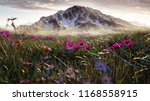 field with flowers in front of... | Shutterstock . vector #1168558915