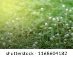 lush meadow with beautiful tiny ... | Shutterstock . vector #1168604182