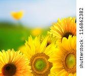 sunflowers | Shutterstock . vector #116862382