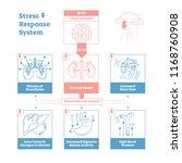 stress response biological... | Shutterstock .eps vector #1168760908