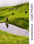 ram and sheep reflecting in... | Shutterstock . vector #1168795345