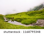 ram and sheep reflecting in... | Shutterstock . vector #1168795348