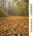 """""""Carpet of Leaves"""" Fallen  leaves along a trail in a park in Monmouth County, New Jersey. - stock photo"""
