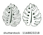 the leaves monstera used in... | Shutterstock .eps vector #1168823218