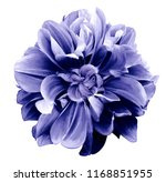 Stock photo purple blue dahlia flower on a white isolated background with clipping path for design 1168851955