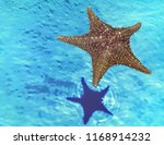 starfish floating on water with ... | Shutterstock . vector #1168914232