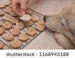 husky dog wants homemade dog...   Shutterstock . vector #1168943188