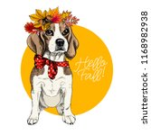 vector portrait of beagle girl... | Shutterstock .eps vector #1168982938
