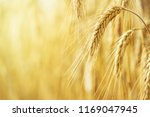 rural landscape   field common... | Shutterstock . vector #1169047945
