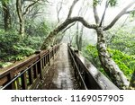 tree branches intertwine in a... | Shutterstock . vector #1169057905
