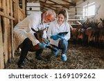 man and woman veterinarians at... | Shutterstock . vector #1169109262
