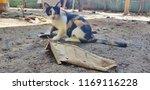 colorful thai cat  | Shutterstock . vector #1169116228