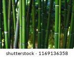 bamboo forest. bamboo green... | Shutterstock . vector #1169136358