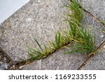 nature reclaiming back its... | Shutterstock . vector #1169233555