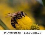 a honey bee  or honeybee  is...   Shutterstock . vector #1169238628
