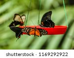 butterflies are setting on food ... | Shutterstock . vector #1169292922